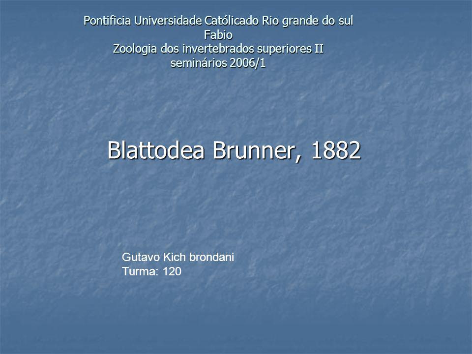 Pontificia Universidade Católicado Rio grande do sul Fabio Zoologia dos invertebrados superiores II seminários 2006/1