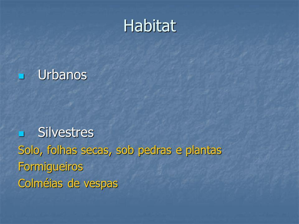 Habitat Urbanos Silvestres Solo, folhas secas, sob pedras e plantas