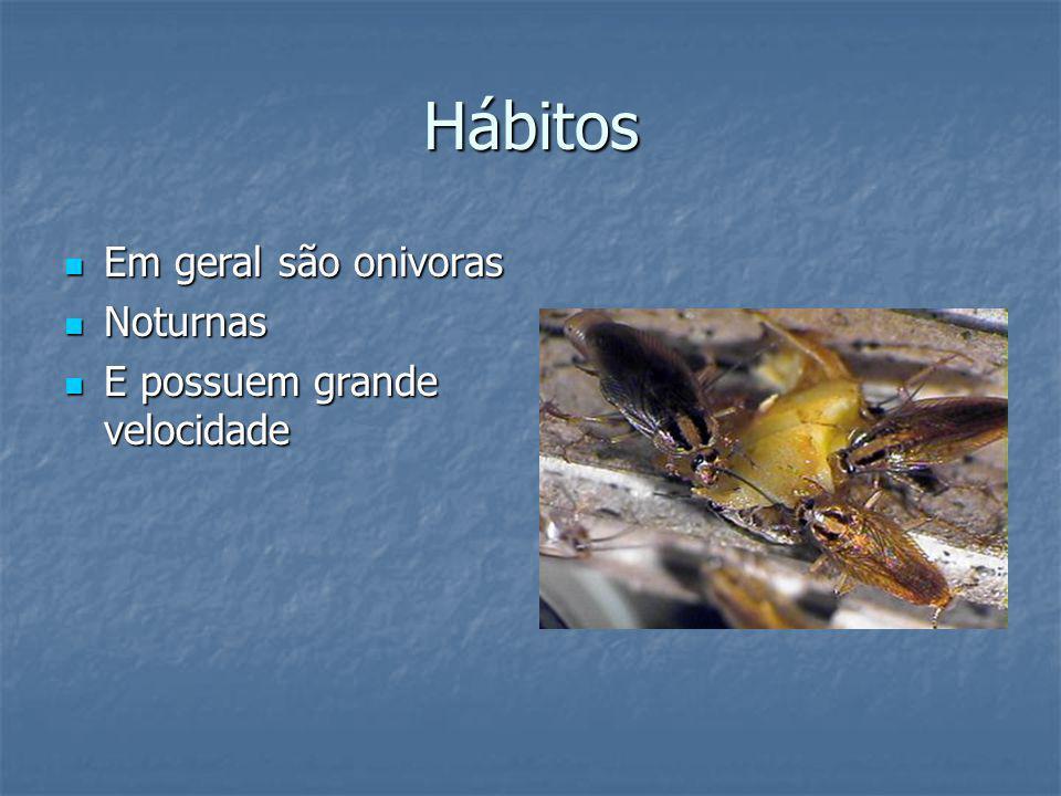 Hábitos Em geral são onivoras Noturnas E possuem grande velocidade