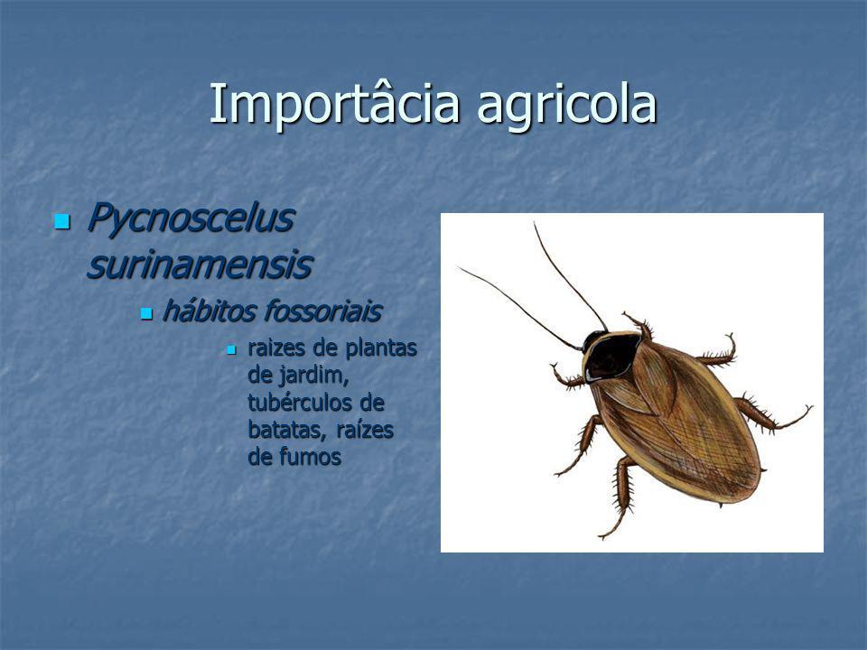 Importâcia agricola Pycnoscelus surinamensis hábitos fossoriais