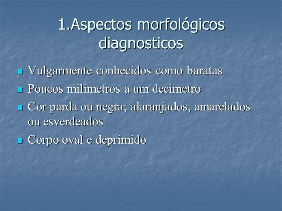 1.Aspectos morfológicos diagnosticos