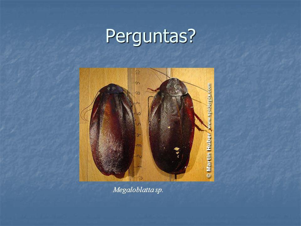 Perguntas Megaloblatta sp.