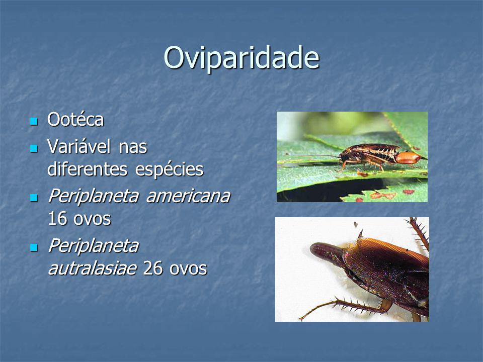 Oviparidade Ootéca Variável nas diferentes espécies