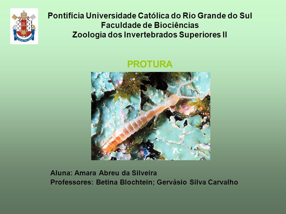 Pontifícia Universidade Católica do Rio Grande do Sul Faculdade de Biociências Zoologia dos Invertebrados Superiores II PROTURA