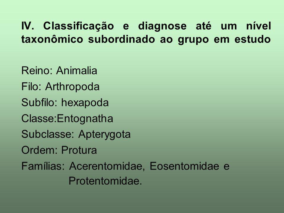 IV. Classificação e diagnose até um nível taxonômico subordinado ao grupo em estudo