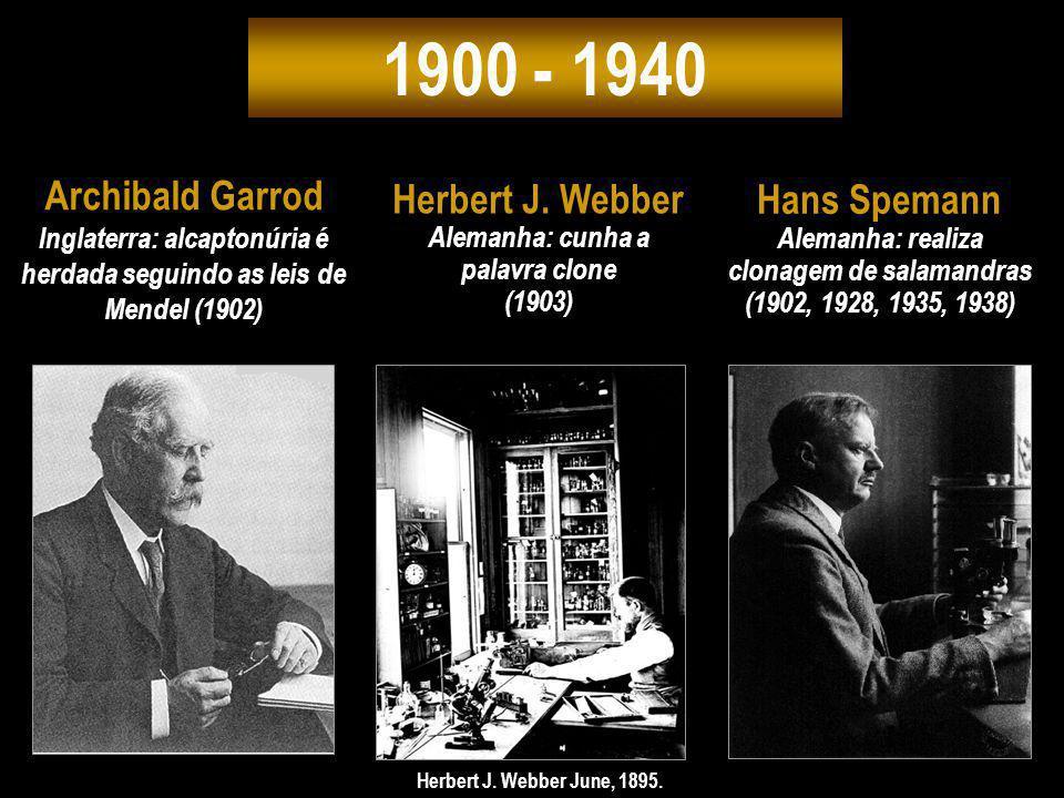 1900 - 1940 Archibald Garrod Herbert J. Webber Hans Spemann