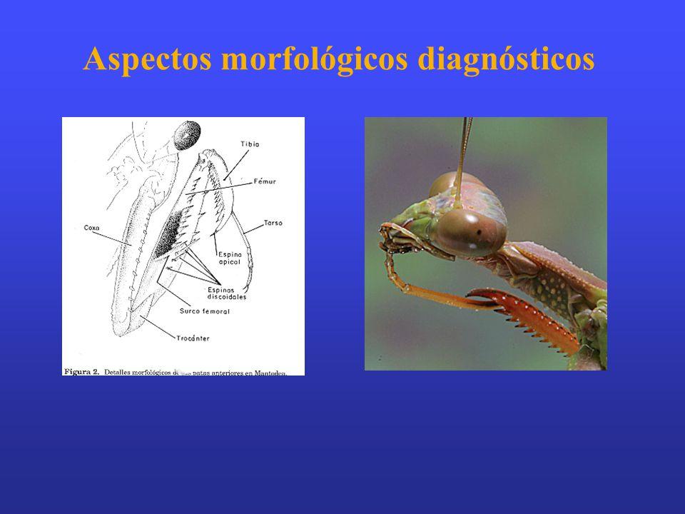 Aspectos morfológicos diagnósticos