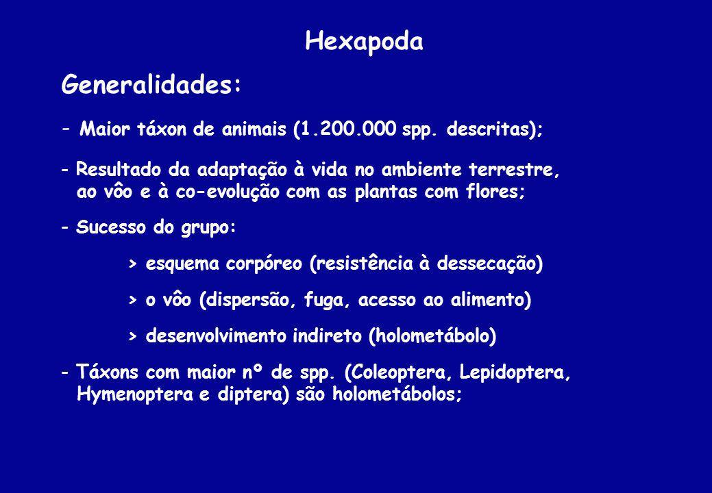 Hexapoda Generalidades: