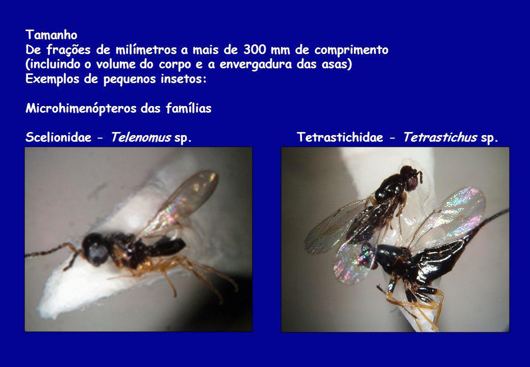 Tamanho De frações de milímetros a mais de 300 mm de comprimento. (incluindo o volume do corpo e a envergadura das asas)