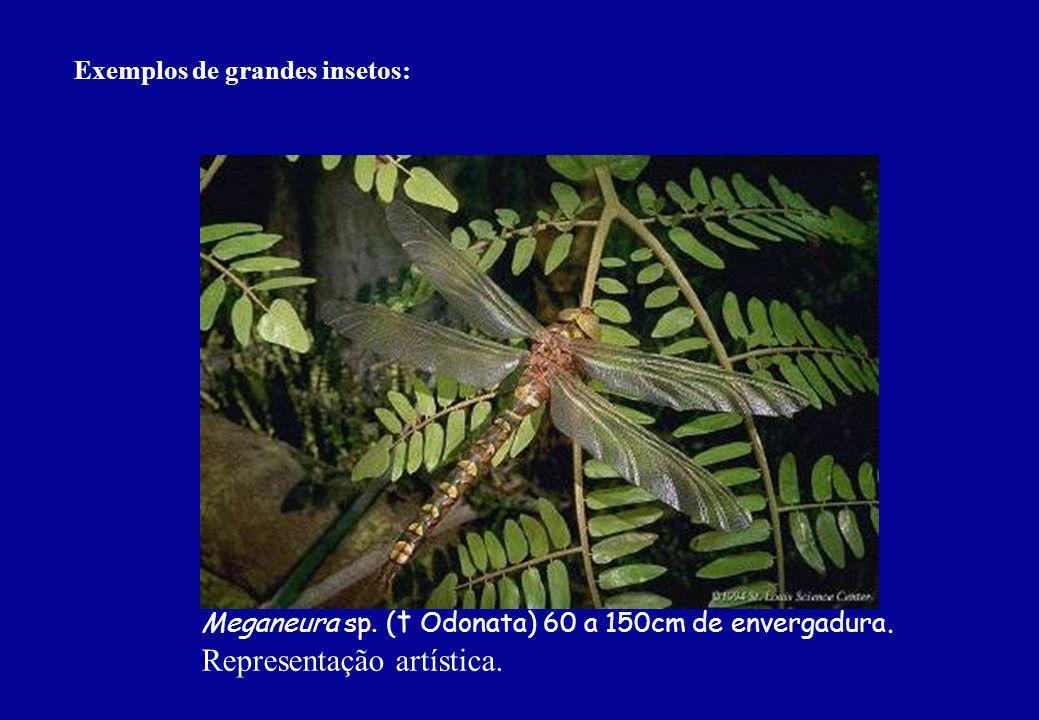 Exemplos de grandes insetos: