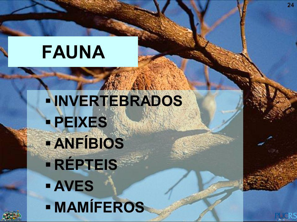FAUNA INVERTEBRADOS PEIXES ANFÍBIOS RÉPTEIS AVES MAMÍFEROS
