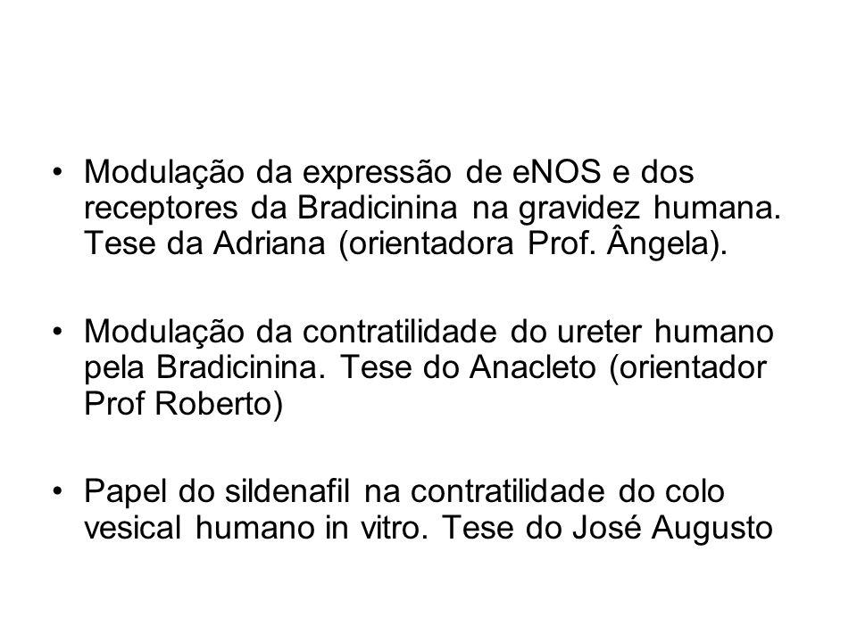 Modulação da expressão de eNOS e dos receptores da Bradicinina na gravidez humana. Tese da Adriana (orientadora Prof. Ângela).