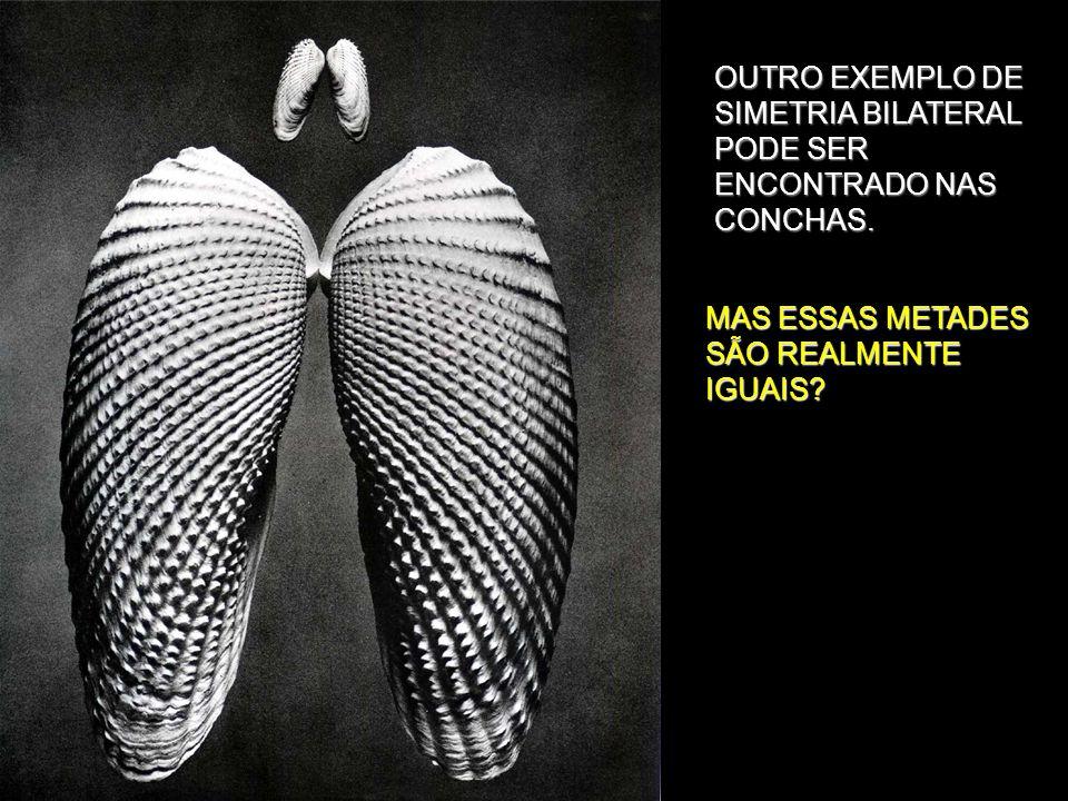 OUTRO EXEMPLO DE SIMETRIA BILATERAL PODE SER ENCONTRADO NAS CONCHAS.