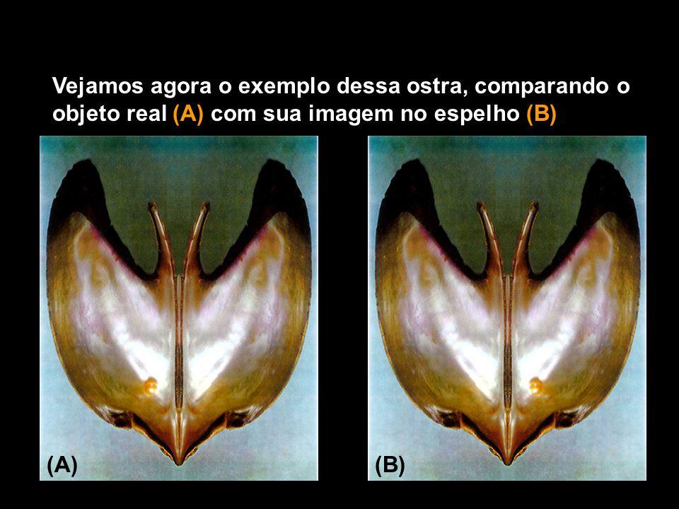 Vejamos agora o exemplo dessa ostra, comparando o objeto real (A) com sua imagem no espelho (B)