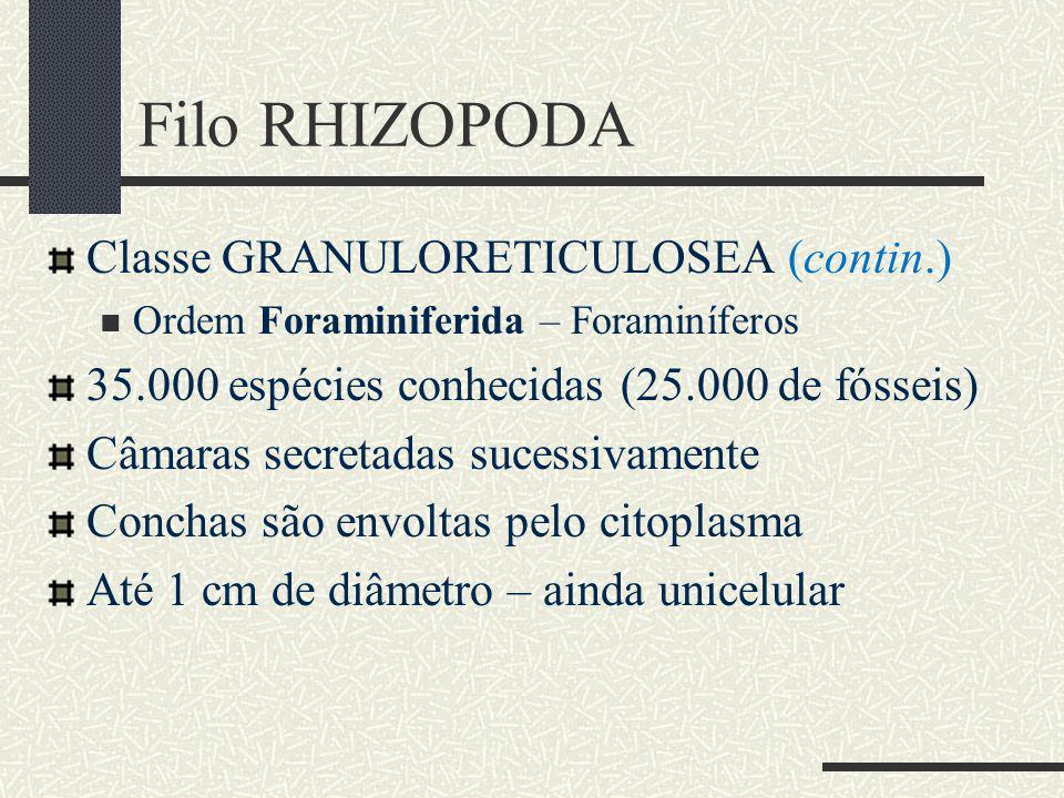 Filo RHIZOPODA Classe GRANULORETICULOSEA (contin.)