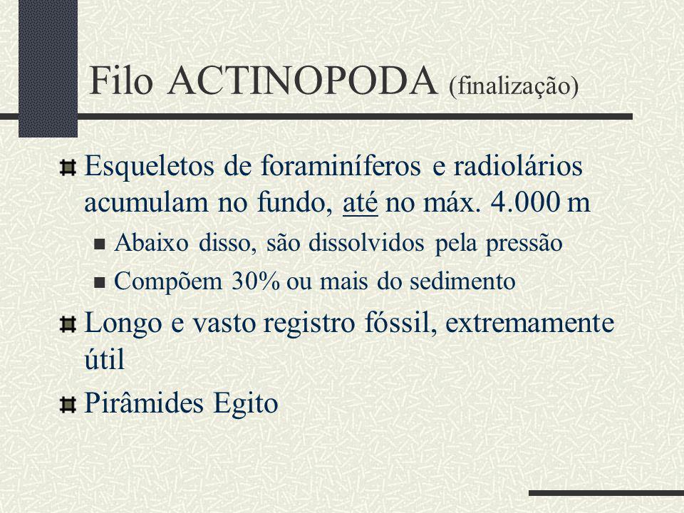 Filo ACTINOPODA (finalização)