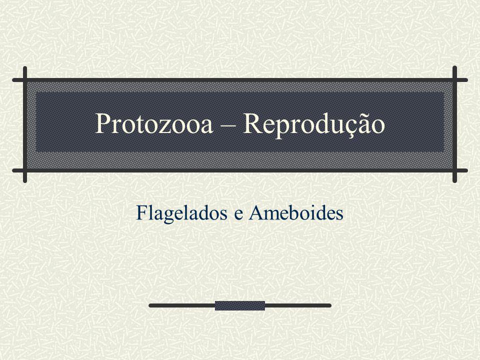 Protozooa – Reprodução