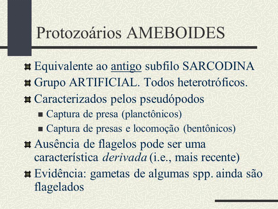 Protozoários AMEBOIDES