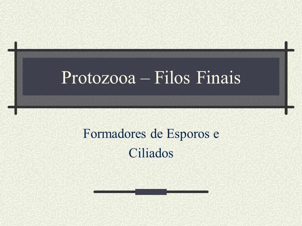 Protozooa – Filos Finais