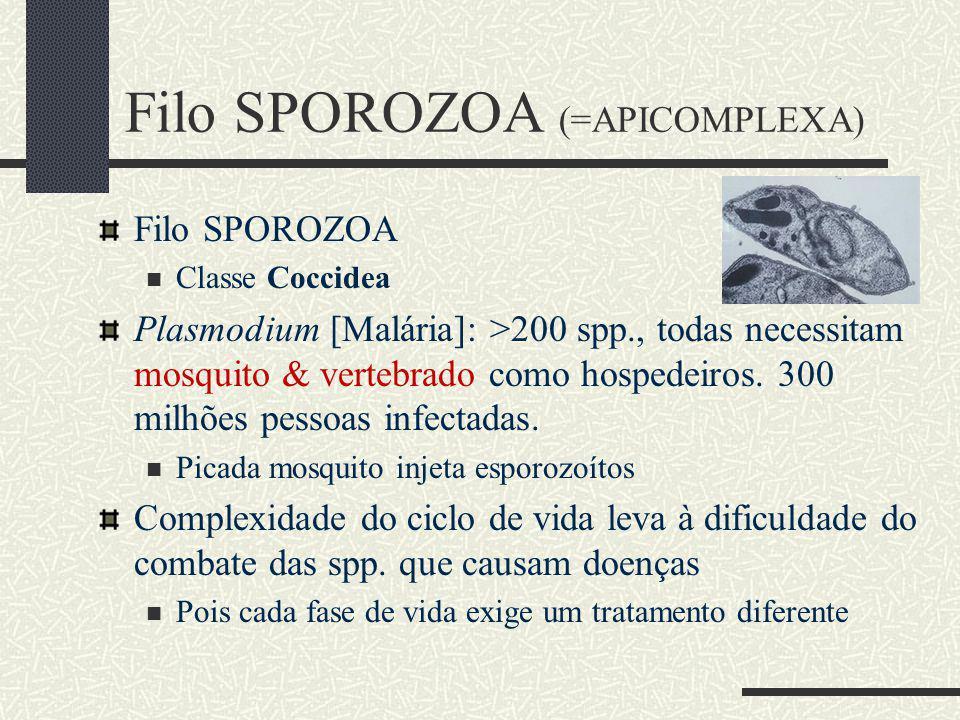 Filo SPOROZOA (=APICOMPLEXA)