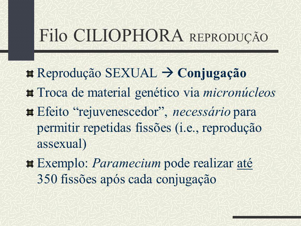 Filo CILIOPHORA REPRODUÇÃO
