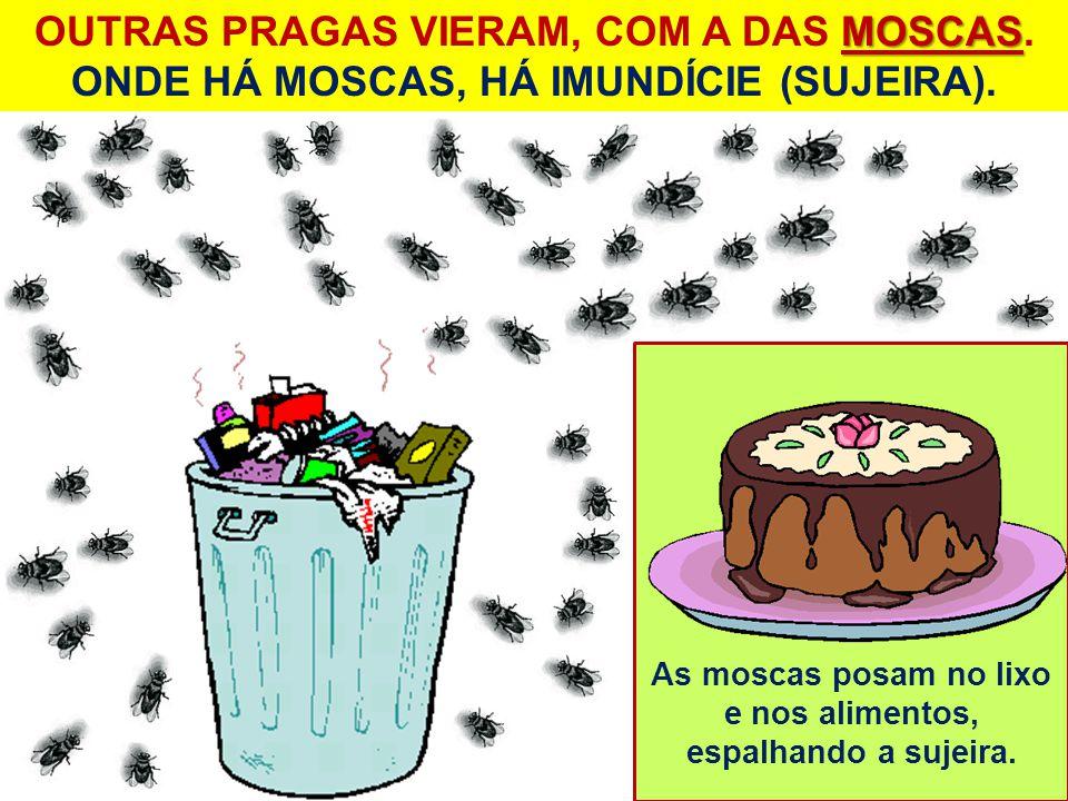 As moscas posam no lixo e nos alimentos, espalhando a sujeira.