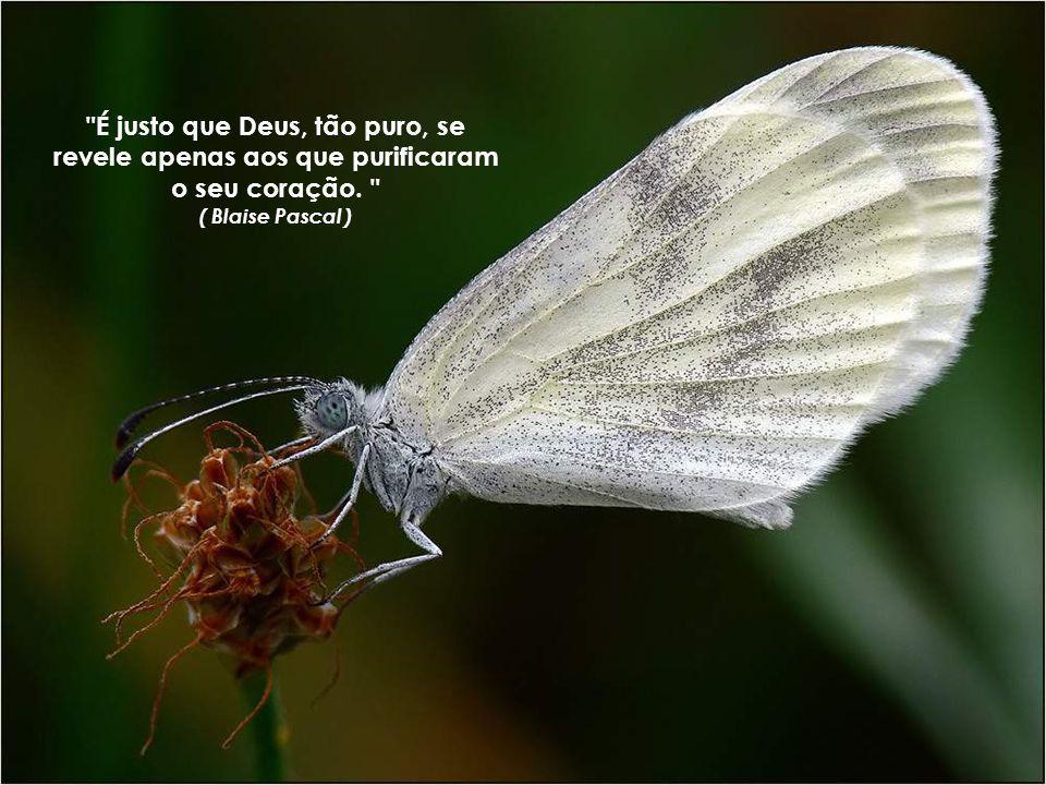 É justo que Deus, tão puro, se revele apenas aos que purificaram o seu coração. ( Blaise Pascal )