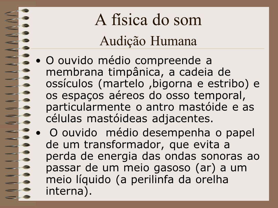 A física do som Audição Humana