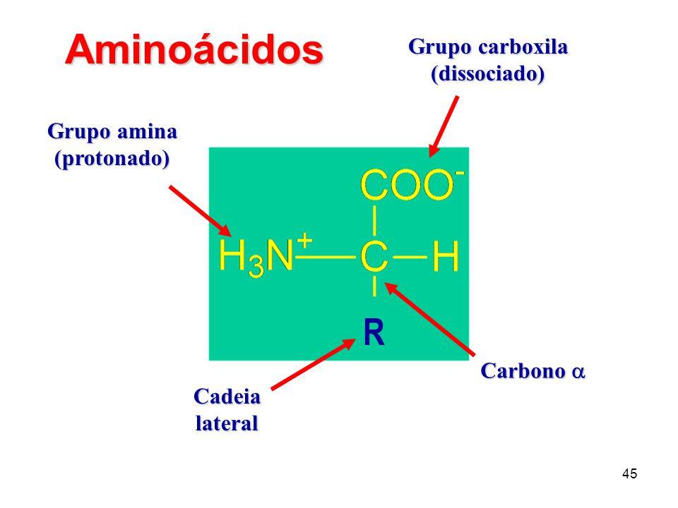 Aminoácidos R Grupo carboxila (dissociado) Grupo amina (protonado)
