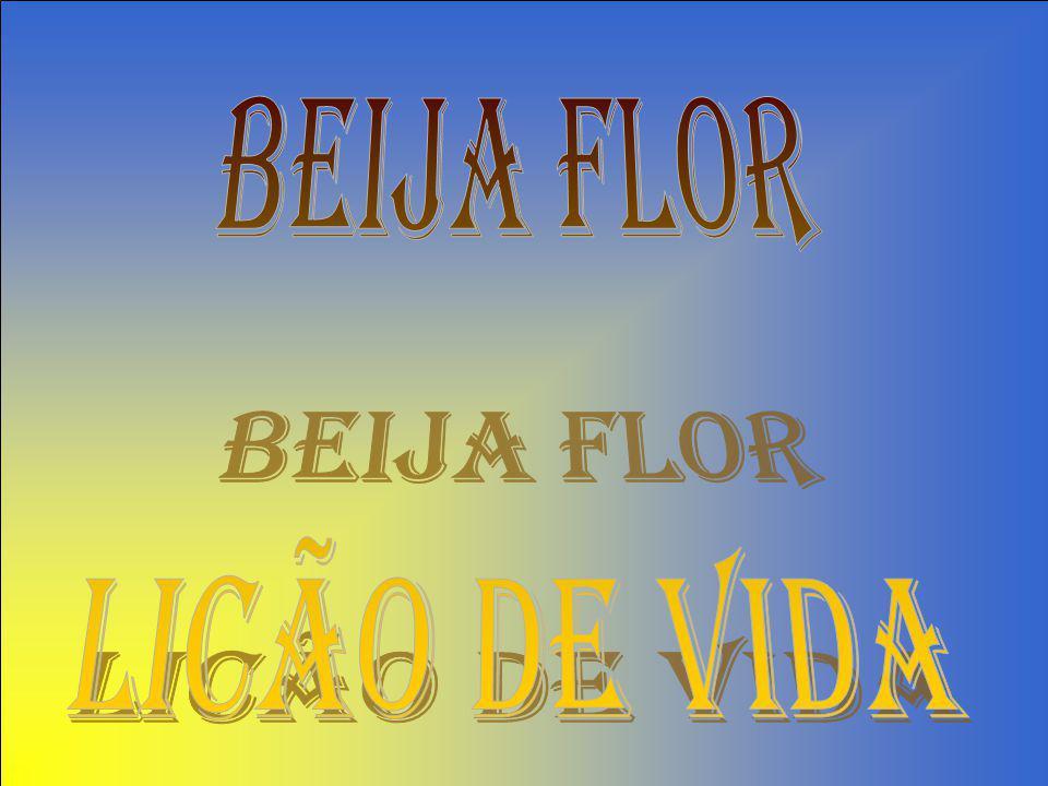 BEIJA FLOR LICÃO DE VIDA