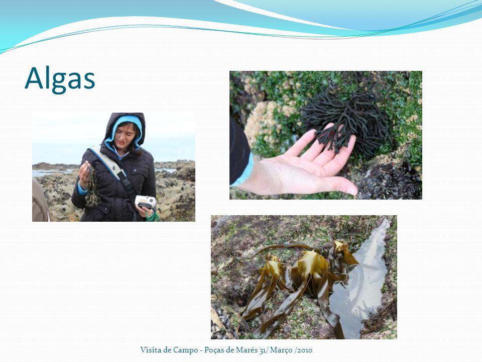 Algas Visita de Campo - Poças de Marés 31/ Março /2010