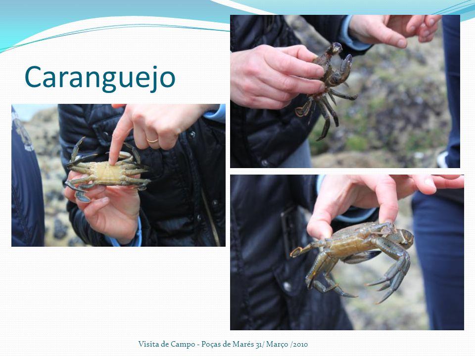 Caranguejo Visita de Campo - Poças de Marés 31/ Março /2010