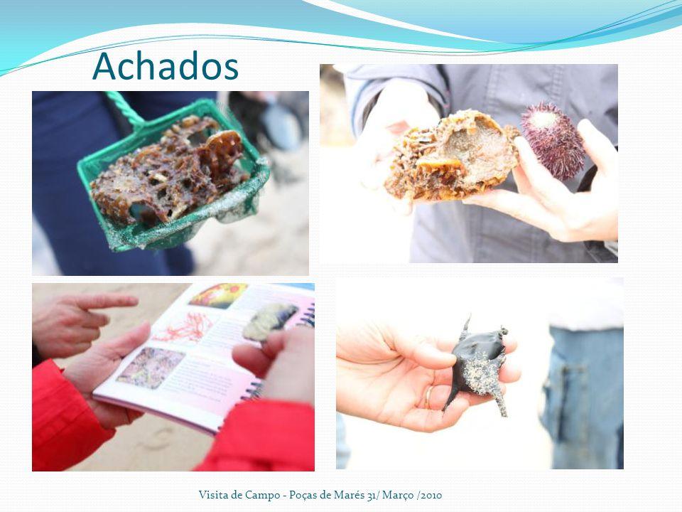 Achados Visita de Campo - Poças de Marés 31/ Março /2010