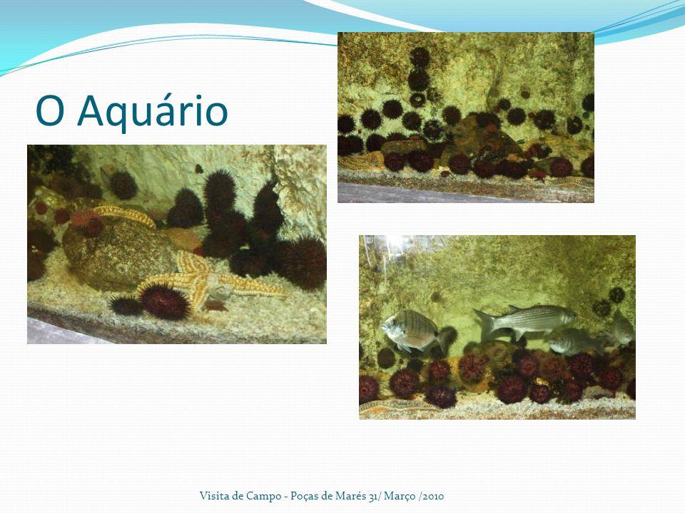 O Aquário Visita de Campo - Poças de Marés 31/ Março /2010