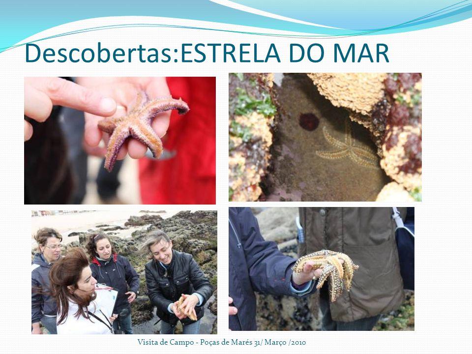 Descobertas:ESTRELA DO MAR