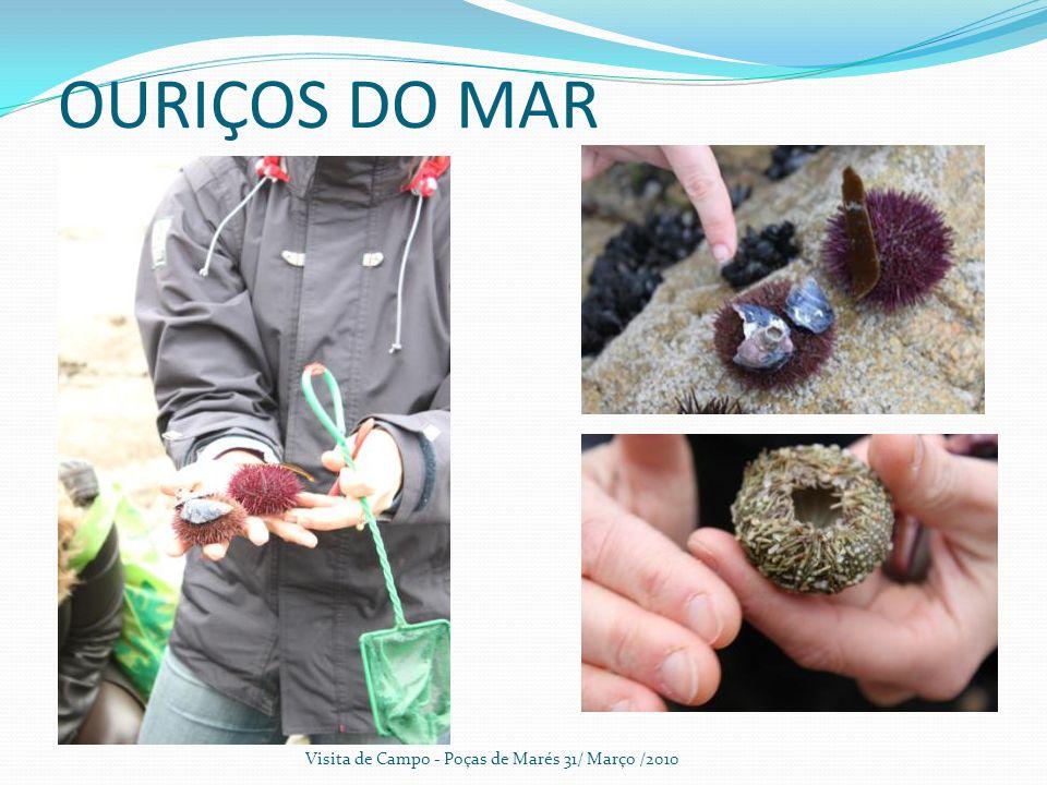 OURIÇOS DO MAR Visita de Campo - Poças de Marés 31/ Março /2010