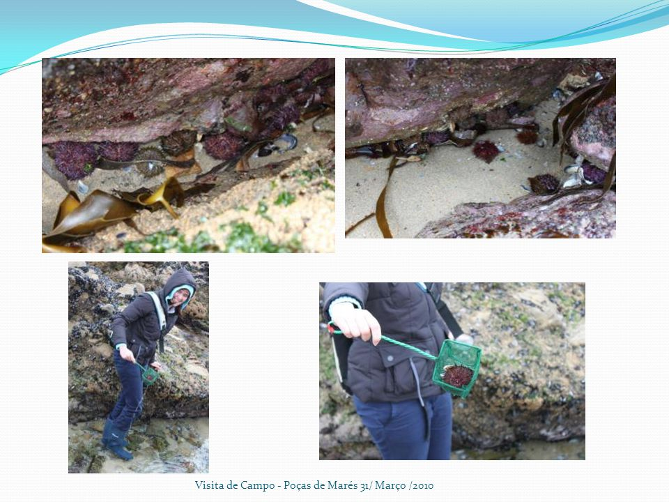 Visita de Campo - Poças de Marés 31/ Março /2010