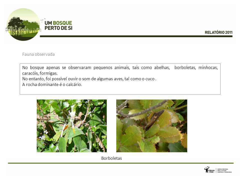 Fauna observada No bosque apenas se observaram pequenos animais, tais como abelhas, borboletas, minhocas, caracóis, formigas.
