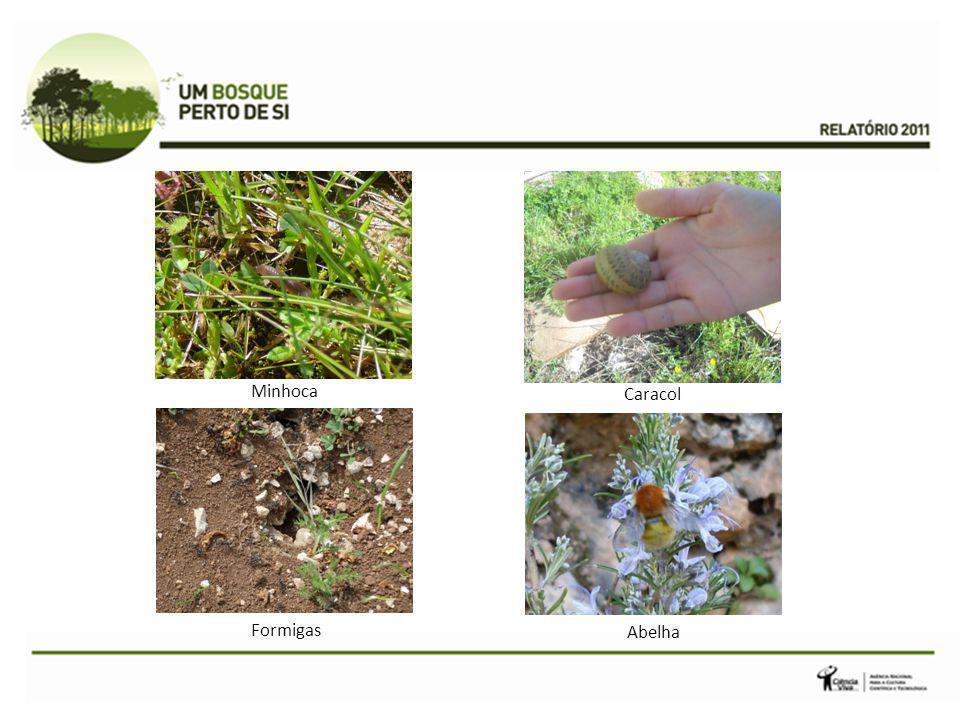 Minhoca Caracol Formigas Abelha