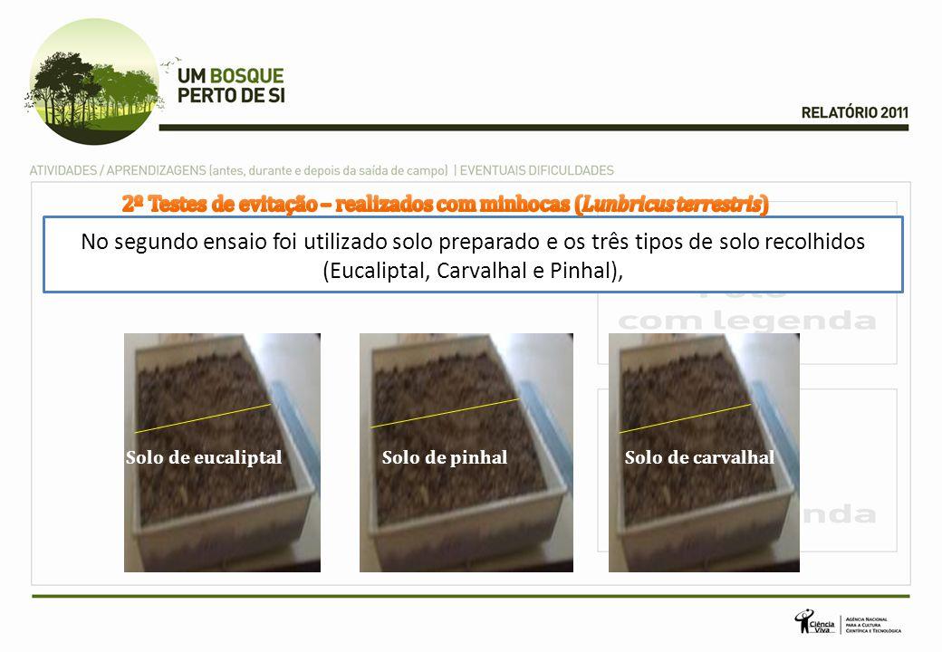 2º Testes de evitação – realizados com minhocas (Lunbricus terrestris)
