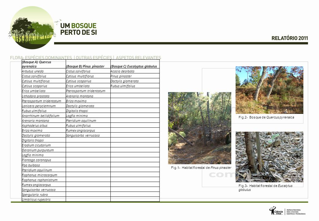 (Bosque A) Quercus pyrenaica (Bosque B) Pinus pinaster