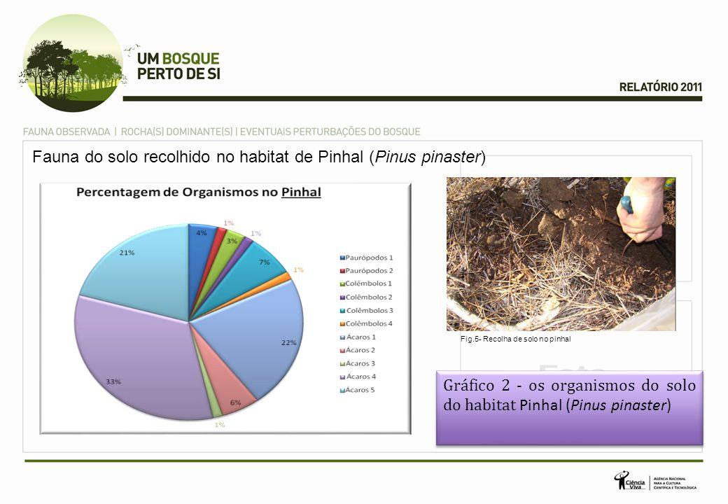 Fauna do solo recolhido no habitat de Pinhal (Pinus pinaster)