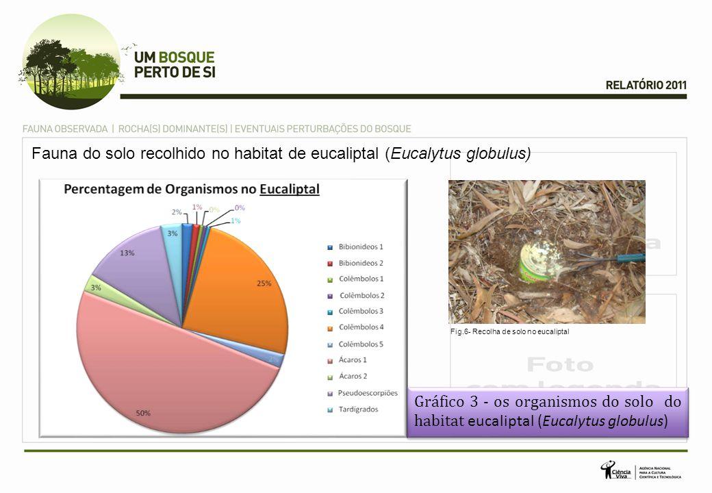 Fauna do solo recolhido no habitat de eucaliptal (Eucalytus globulus)