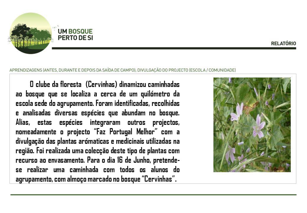 O clube da floresta (Cervinhas) dinamizou caminhadas ao bosque que se localiza a cerca de um quilómetro da escola sede do agrupamento.