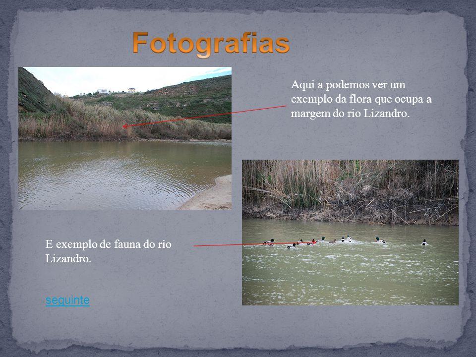 Fotografias Aqui a podemos ver um exemplo da flora que ocupa a margem do rio Lizandro. E exemplo de fauna do rio Lizandro.