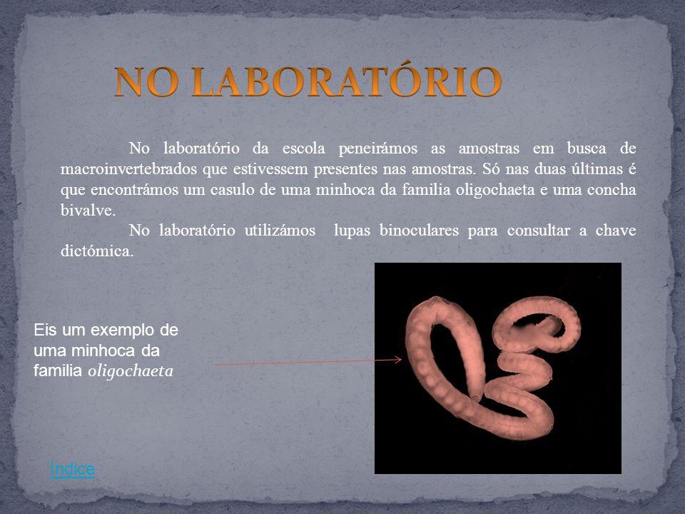 NO LABORATÓRIO