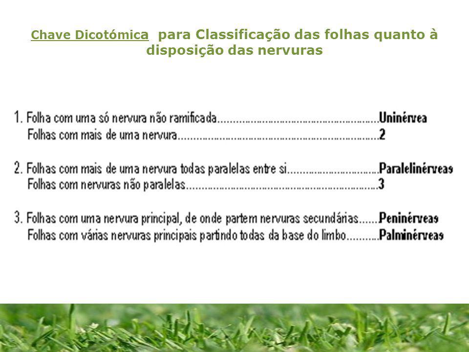 Chave Dicotómica para Classificação das folhas quanto à disposição das nervuras