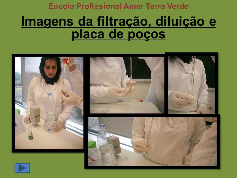 Imagens da filtração, diluição e placa de poços