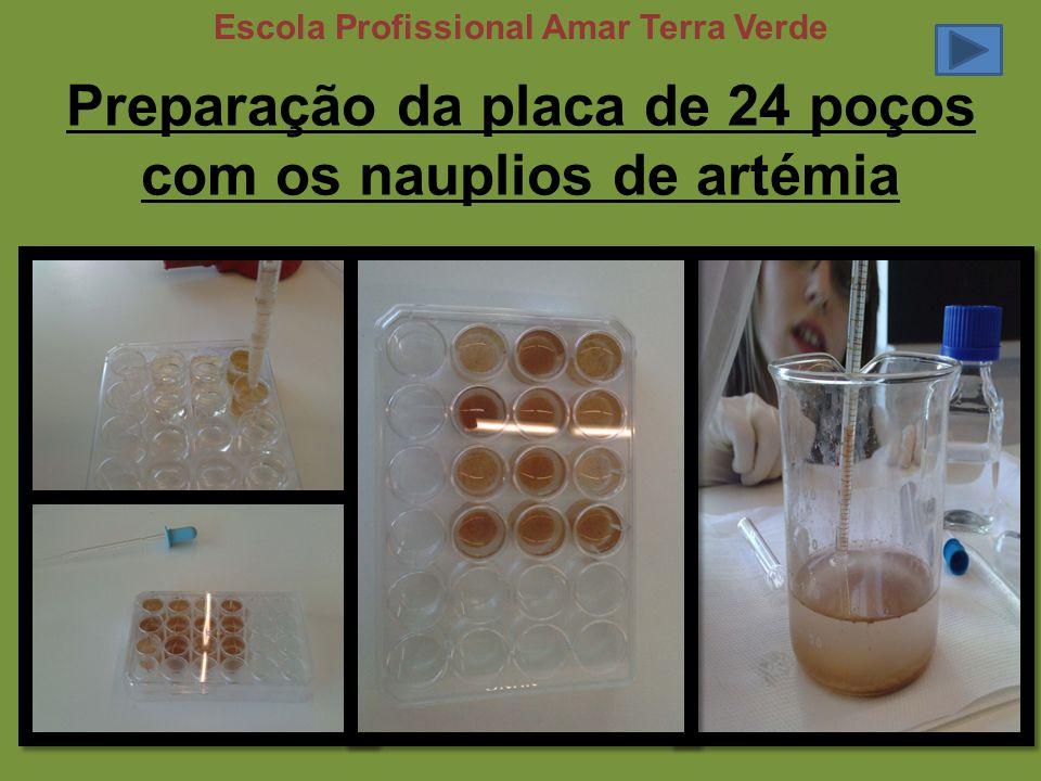 Preparação da placa de 24 poços com os nauplios de artémia