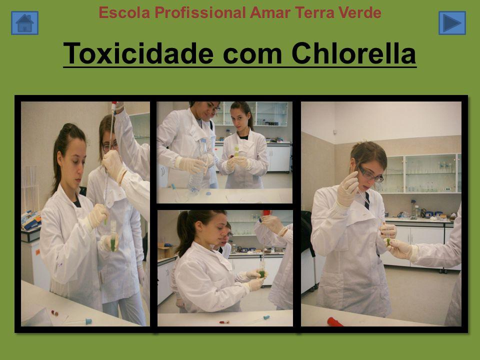 Toxicidade com Chlorella